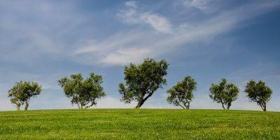 Mainz-Bingen: Jetzt für den Umwelt- & Klimaschutzpreis bewerben