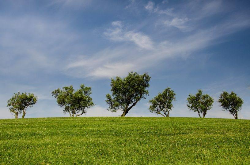"""""""Dein Baum fürs Klima"""" geht in die nächste Runde"""