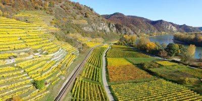 Upper Rhine Valley Vineyards River  - Free-Photos / Pixabay