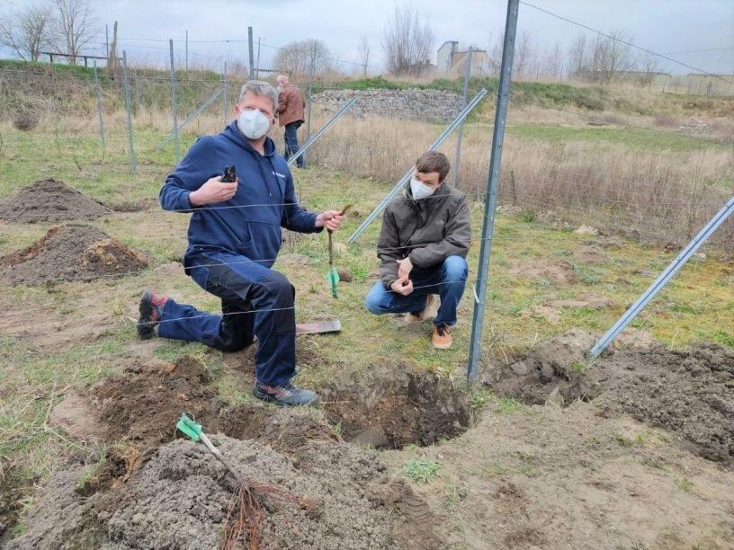 Partnerschaftsweinberg in Neuruppin wächst