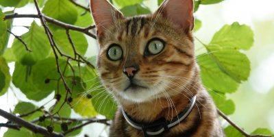 Bad Kreuznach: Katze nach zwei Tagen aus elf Metern Höhe gerettet