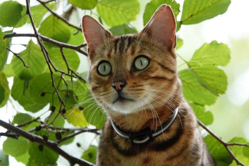 Katze nach zwei Tagen aus elf Metern Höhe gerettet
