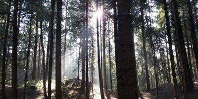 Bad Kreuznach: Bundeswaldprämie VG Lagenlonsheim-Stromberg