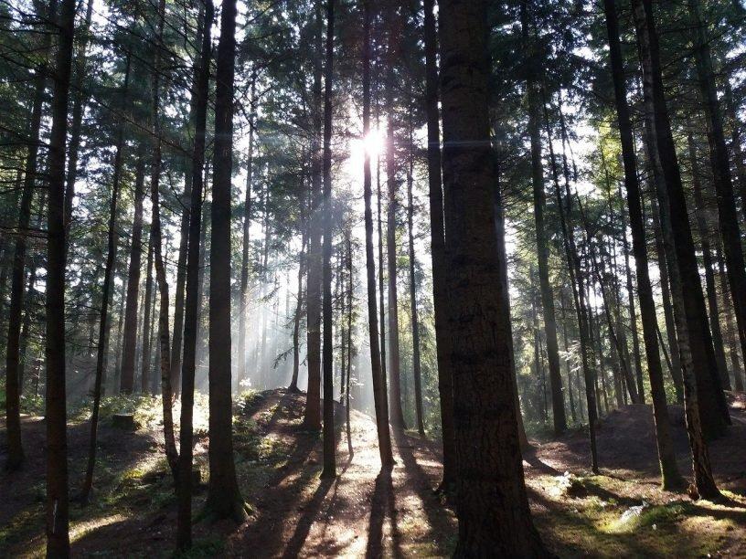 Wood Light Sun Autumn Germany  - Uwe_Jelting / Pixabay