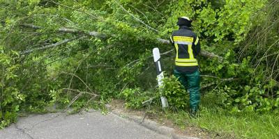 Bad Kreuznach: Baum in Mandel entwurzelt
