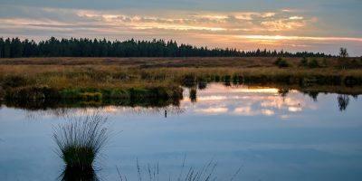 Moor Swamp Landscape Nature  - herbert2512 / Pixabay