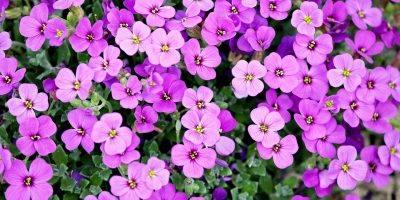Purple Flowers Petals Bloom  - manfredrichter / Pixabay