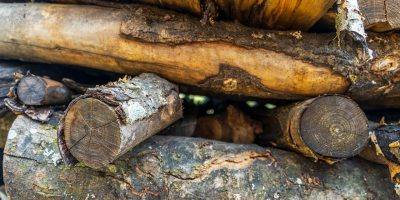 Wood Firewood Pile Logs Trunks  - ThorstenF / Pixabay