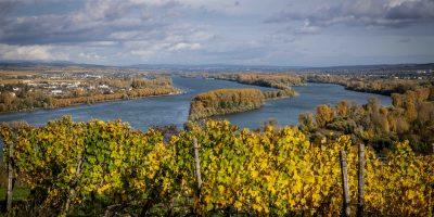 Mainz-Bingen: Alternative für Weinfest