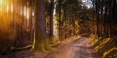 Birkenfeld: Wegepate für Wanderweg