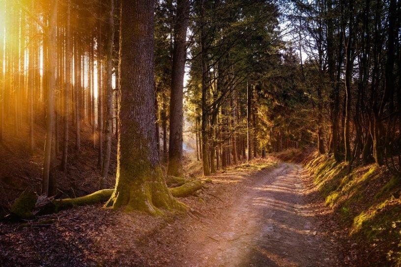 Wegepate für Wanderweg
