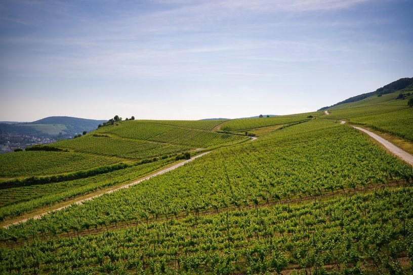 Fünftes Amtsjahr für Dromersheimer Weinmajestäten
