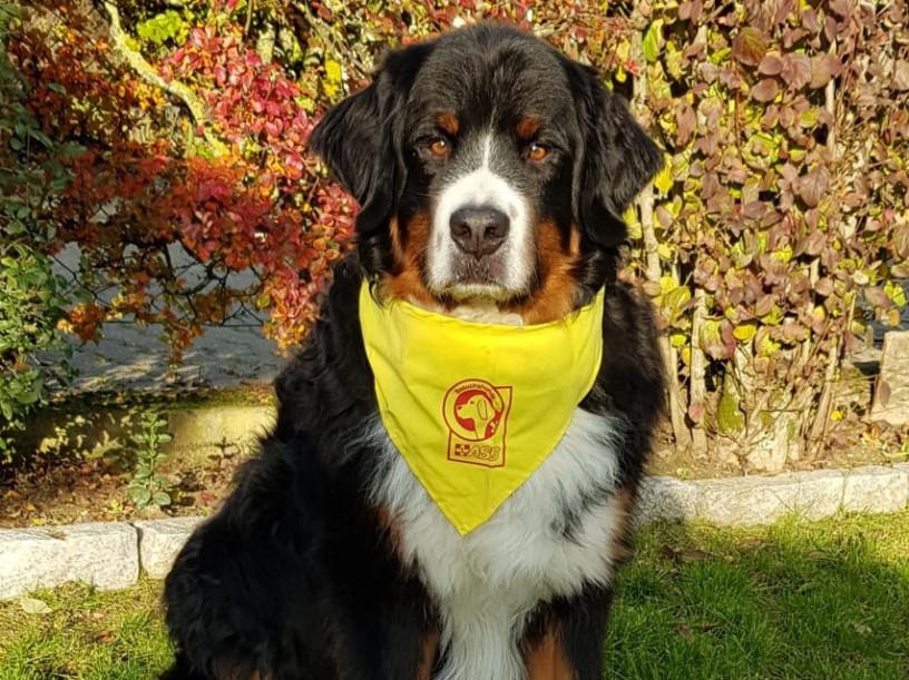 Hundebesuchsdienst sucht Unterstützung auf vier Pfoten