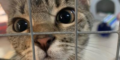 Körbchen gesucht: Katzen Olivia, Ophelia und Olga