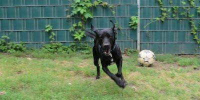 Körbchen gesucht: Labrador Sammy